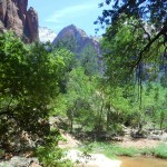 Binnenin de kloof in Zion National Park