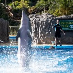 Dolfijnenshow in Palmitos Park