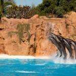Dolfijnenshow in het Loro Parque Tenerife