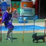 """Een verrassend vermakelijke dierenshow """"Pet's rule"""""""