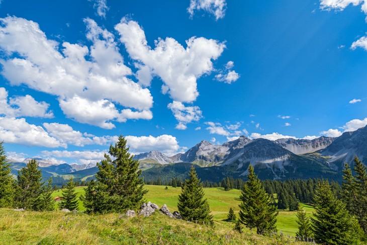 Bergen en dennenbomen in Zwitserland