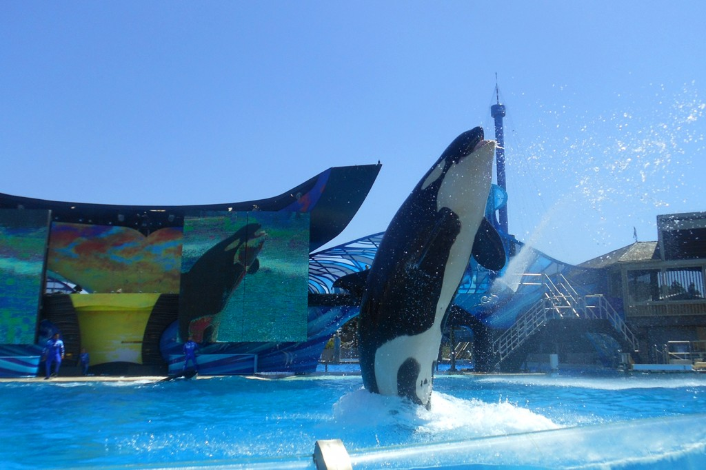 Orka's in Sea World