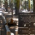 Waarschuwing voor ijle lucht in Sequoia National Park