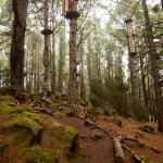 Hoog in de bomen in Forestal Park Tenerife