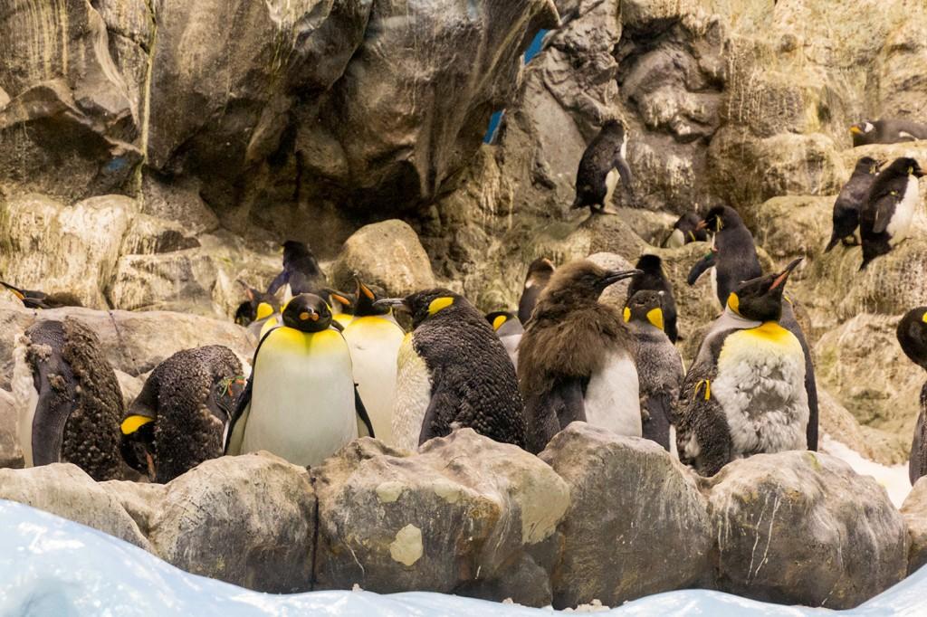 Verschillende soorten pinguïns