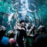 Lekker druk in het aquarium