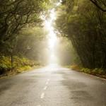 Rijden door het laurierbos in het nationale park