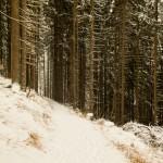 Wandelen over besneeuwde bospaden