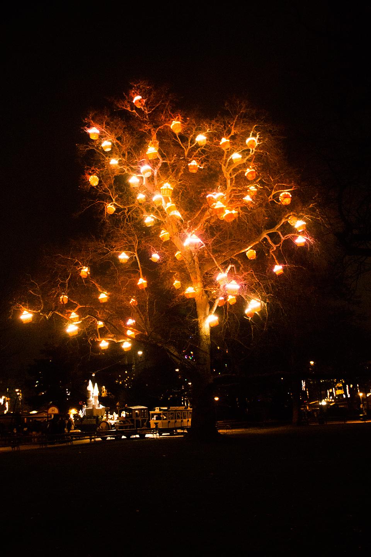 Een mooi verlichte boom in Wenen