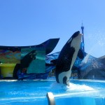 Spectaculaire shows bekijken in Sea World